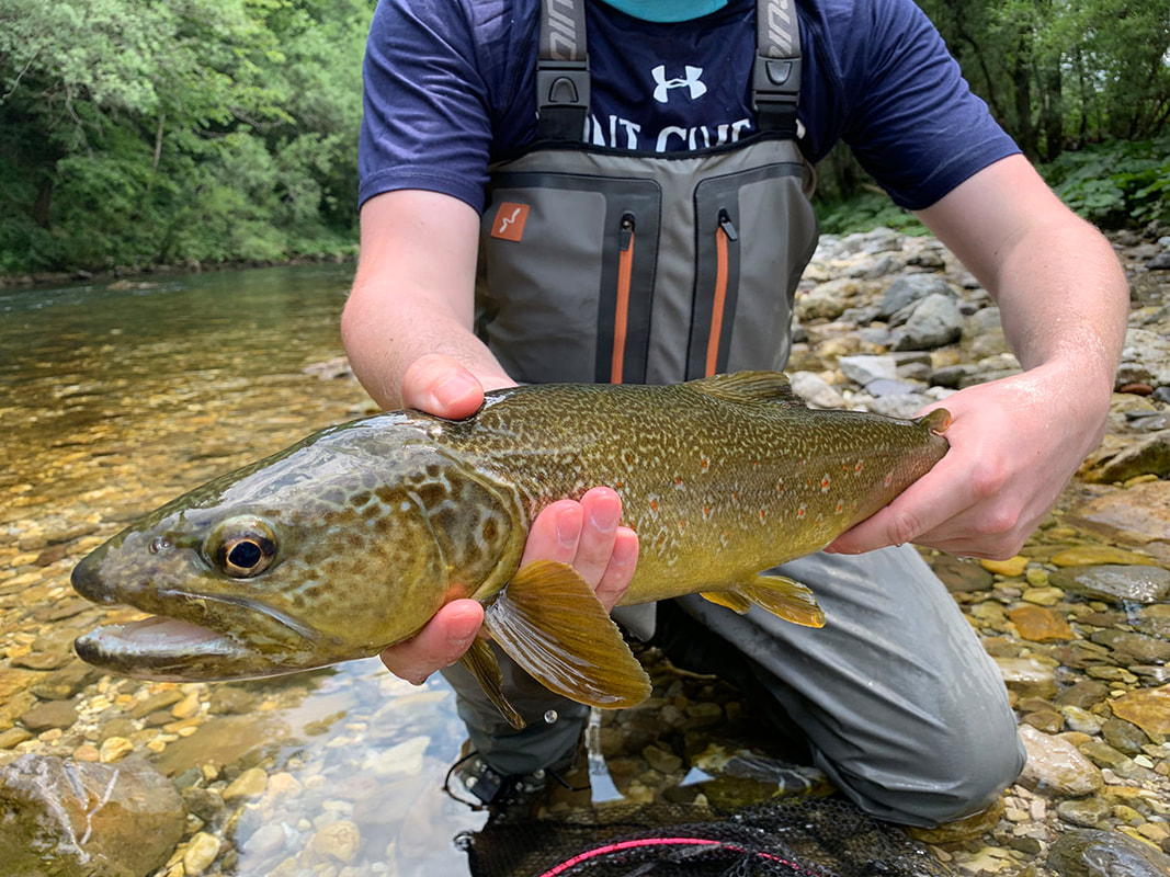 Idrijca Marble trout - Fly fishing guide Slovenia